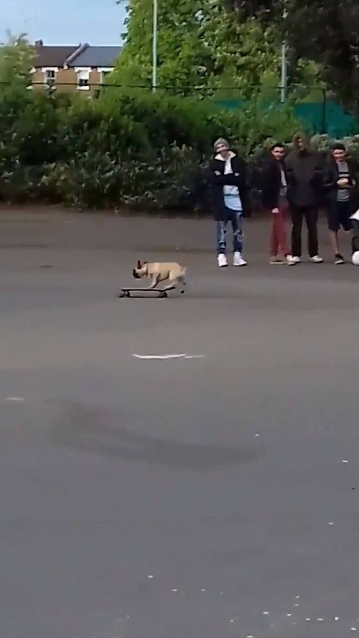 Dog Turns Up At Local Park to Show Off Skateboarding Tricks