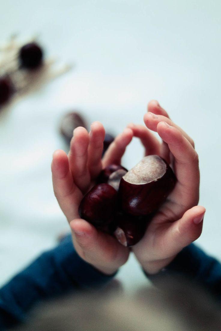 #autumn #chesnuts