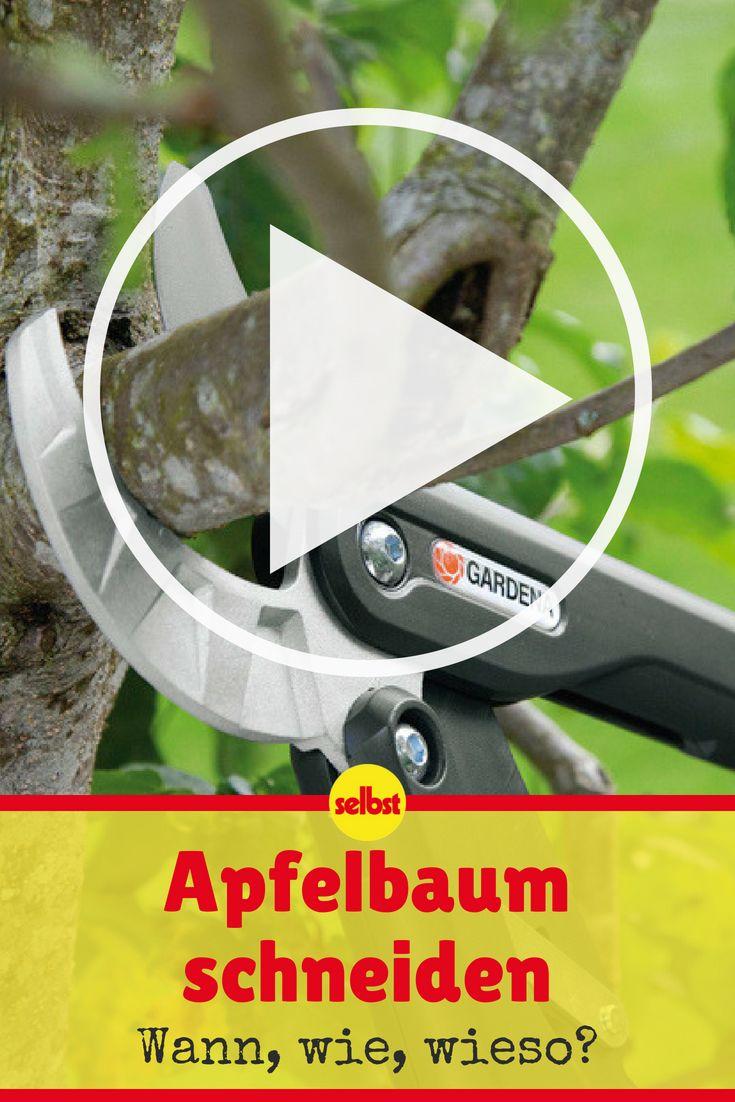 apfelbaum schneiden obstbaumschnitt u pflege pinterest apfelb ume schneiden obstb ume. Black Bedroom Furniture Sets. Home Design Ideas