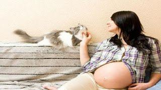 Kenali Apa Penyebab Toksoplasma Pada Kehamilan