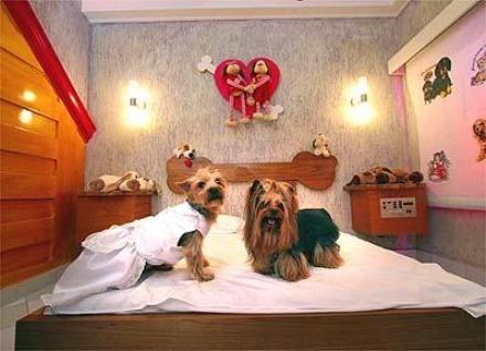Em Belo Horizonte, um motel bom para cachorro