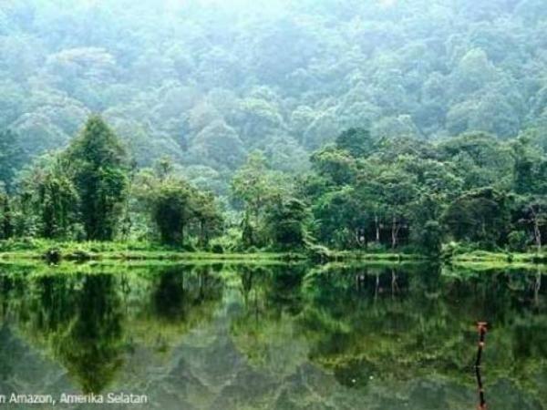 Sepuluh Fakta Menakjubkan Tentang Hutan Hujan Amazon