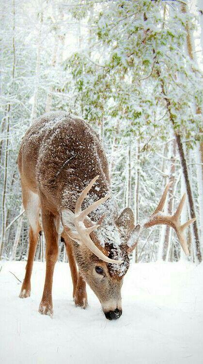 Multi-desgaste Envoltura - Ciervos Nieve Trineo Rojo Por Vida Vida d8hfc
