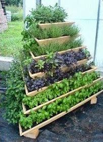170 best Container Gardening images on Pinterest