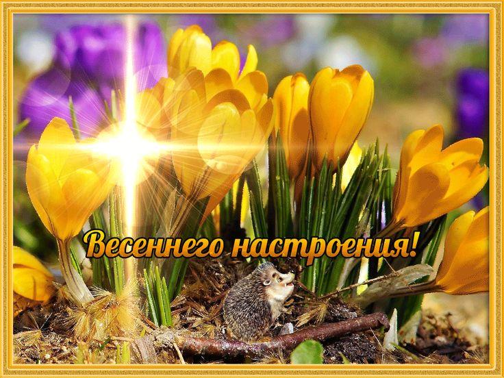 открытка доброго весеннего дня картинки поздравлениями