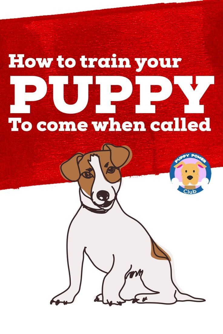 8f77fcc355096d54a01e92a9dd3227ba - How Do You Get A Puppy To Come When Called