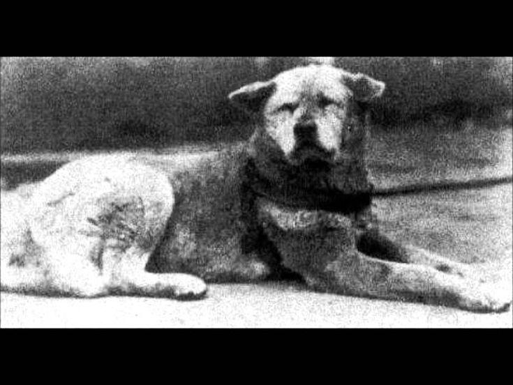 foto real perro hachiko