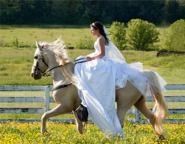 Tennessee bride rides a gorgeous palomino horse, by Tri-Cities wedding photography company Photo Tech Photography.