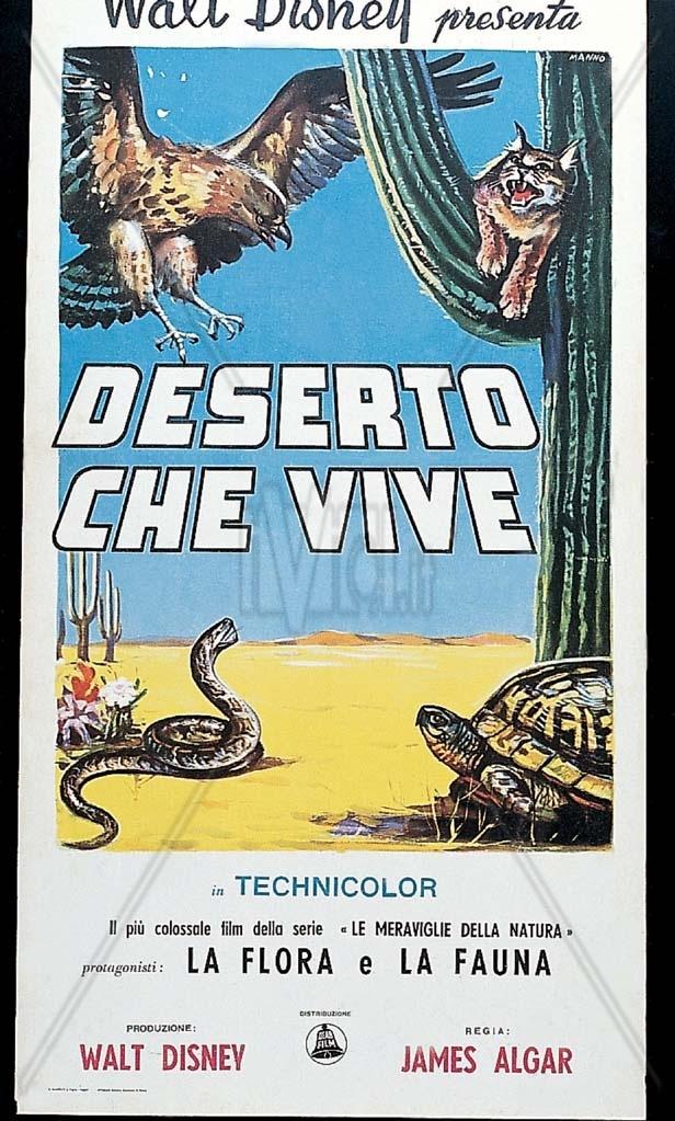 """Tutti vivono lí,  ma chi vive veramente è il deserto. Come nel film.  – Che film?  – IL DESERTO CHE VIVE, un documentario della Disney.  Non l'hai visto da piccola? [Nel link """"la danza degli scorpioni"""" dal film di James Algar]"""