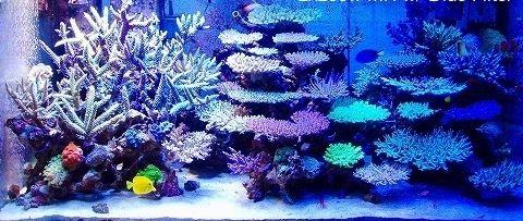 Beautiful Coral Reef Aquarium