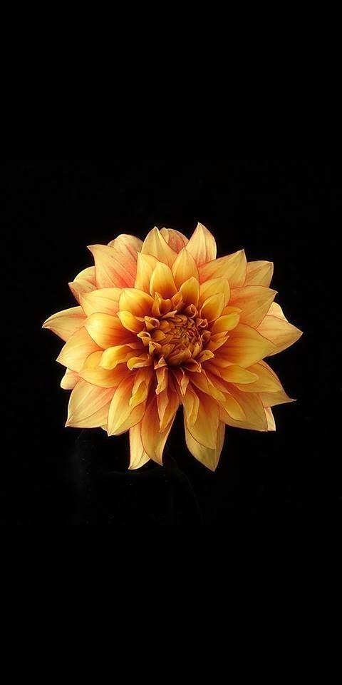 Redmi Note 6 Pro  Flower Wallpaper