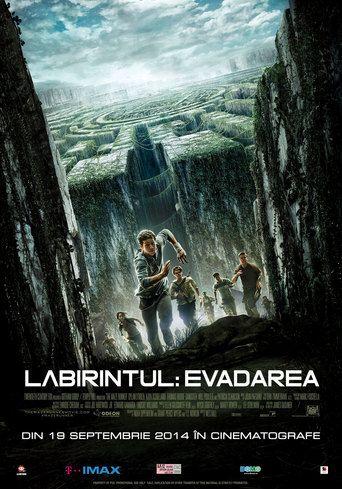 Filmul Labirintul: Evadarea - The Maze Runner Labirintul: Evadarea - The Maze Runner online