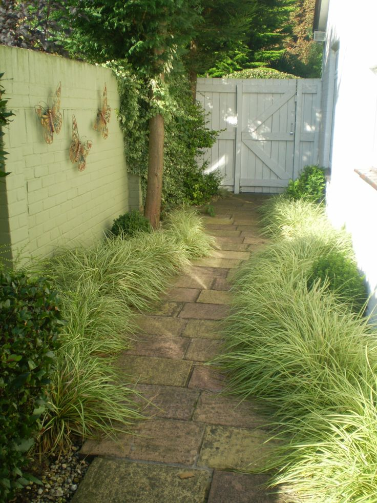 Luciana Cordery Garden Design UK - Side path with Carex oshimensis 'Evergold'.