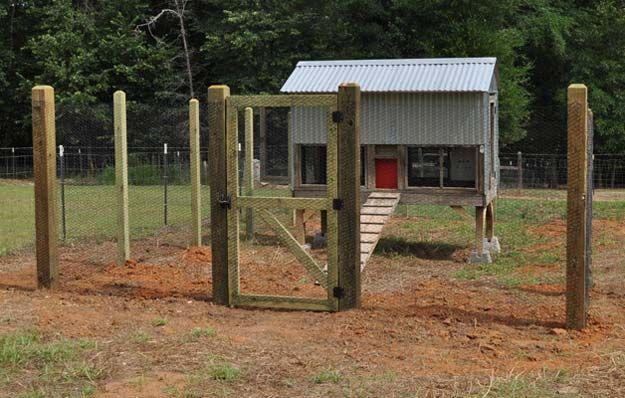 Protection | Planning Your Chicken Coop | Simple DIY Tips for a Happy Chickens | Livestock and Homesteading Ideas