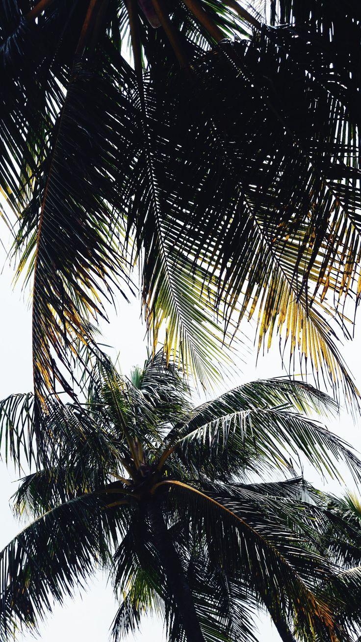 palm leaf fin