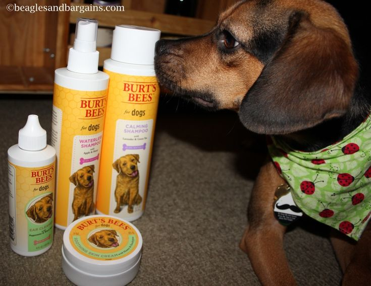 Burt Bees Dog Ear Cleaner Review