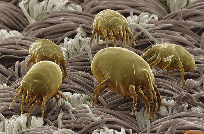 除菌スプレーは猛毒?「カビ・ダニ」を急速で死滅させる「天然スプレー」とは? | 国際医療 Specialist Moe!