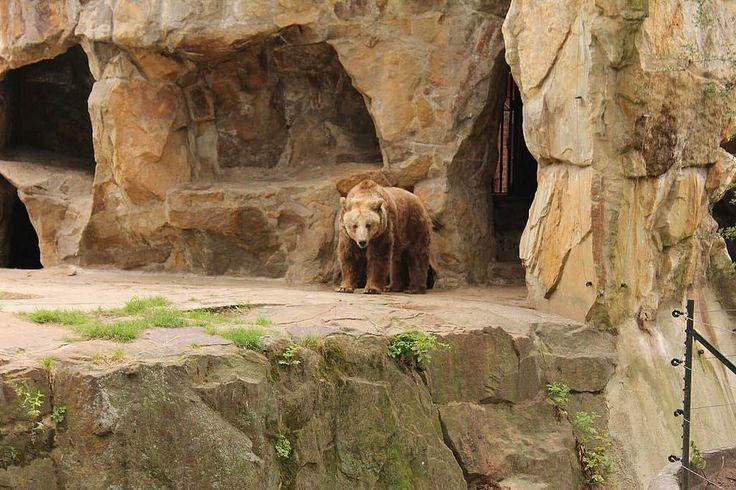 Spectacular Berlin Innenansicht des Strau enhauses im Zoologischen Garten