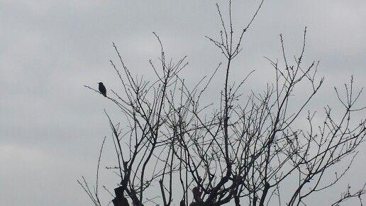 Winter from our garden-Lone singing bird