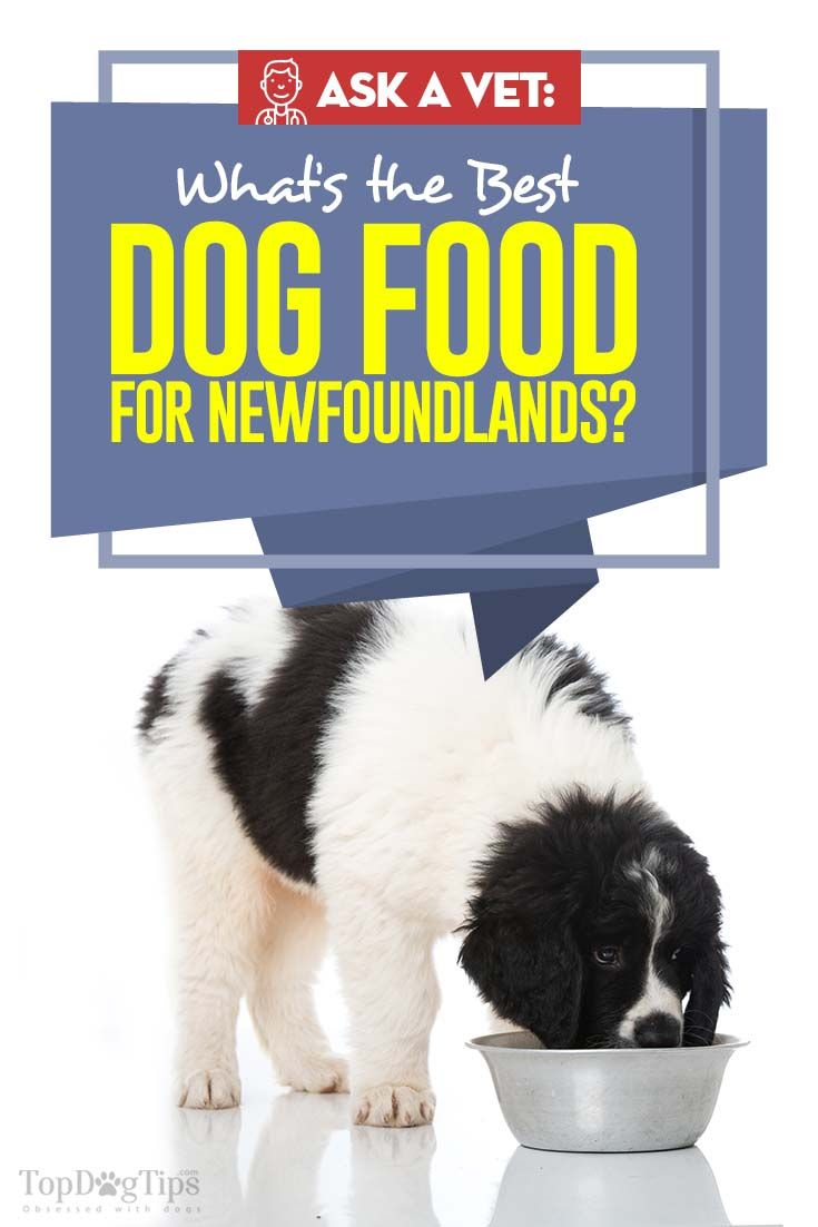 10 Vet Recommended Brands For Newfoundlands Dog Food Recipes