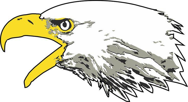 Eagle, Bald Eagle, Screaming Eagle