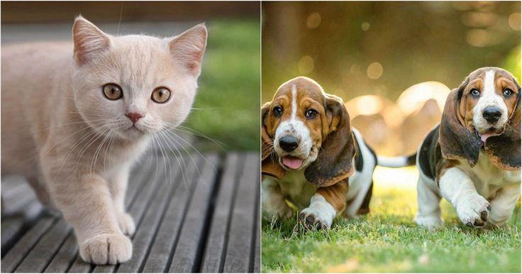 Este test revela si tu mascota ideal son los perros o gatos según tu personalidad -  Los animales, al igual que las personas, también llegan a contar con estereotipos porcompartir ciertas características generales entre sus especies que definen su personalidad; es por eso, que si bien en general los perros son más amigables y sociables que otras especies, pero entre ellos también existela diferencia como sucede con losperros grandes, que suelen ser más calmados que los perros pequeños…
