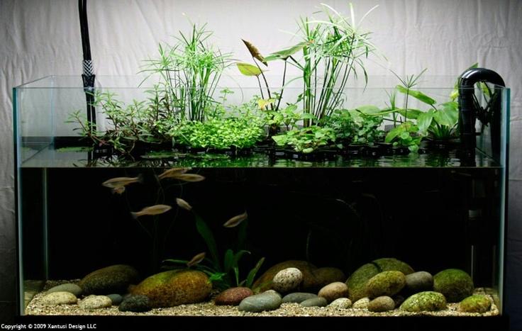 aquascape on Pinterest Aquascaping, Aquarium and Aga