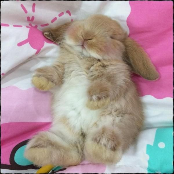 1000 images about adorable animals on pinterest best dog breeds tiger cubs and cute kittens. Black Bedroom Furniture Sets. Home Design Ideas