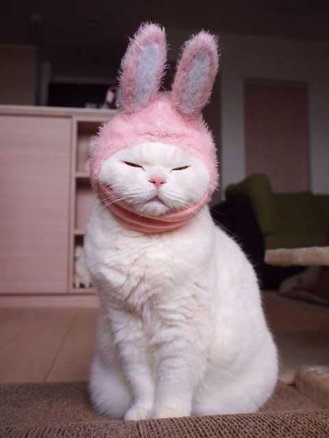 BABY, BUNNY KITTEN. TOO CUTE. LOL I'M SO HAPPY YOU GAINED 3 POUNDS. YAY. FOUND NEW FOOD IDEAS TO TRY AND HOPE YOU LIKE THEM SO I CAN KEEP GETTING YOU TO PUT ON THE POUNDS. XXXOOO JOY