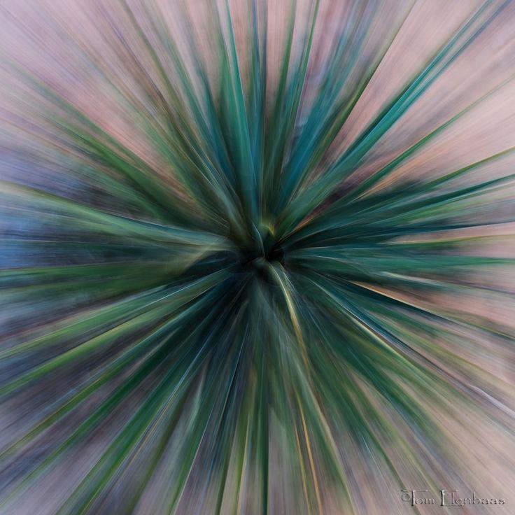 Agave Kaleidoscope, Zion National Park, Utah.