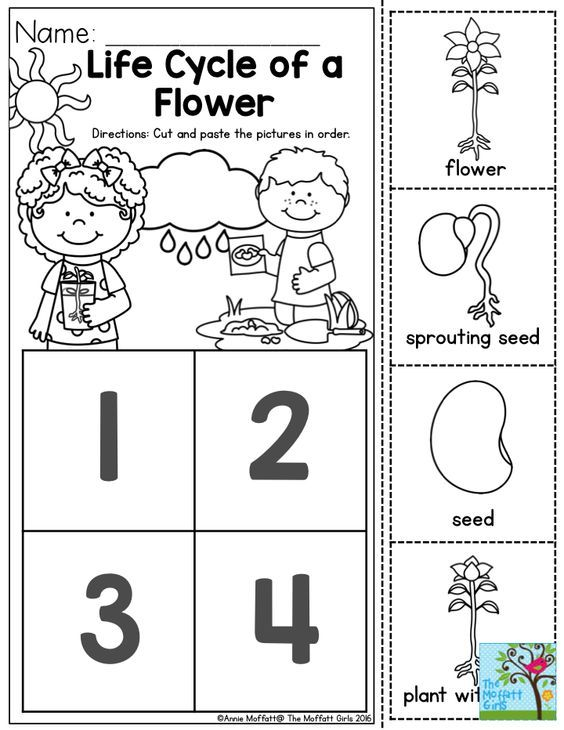 Life Cycle of a Flower- Students love to learn about how things begin and change over time. This activity would be great do do along with sprouting beans in a baggie!: