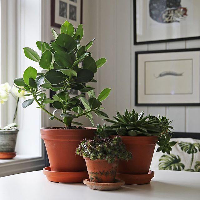 Green plants #greenplants #terracotta #scandinavianhome