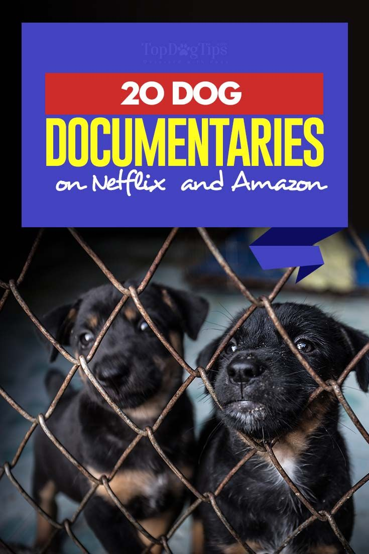 20 Dog Documentaries On Netflix And Amazon Dog Documentary Dogs