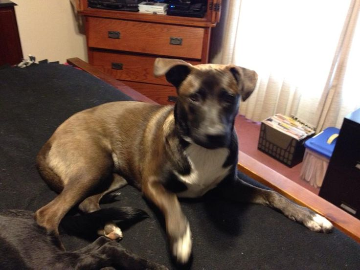 Pin on Lost Dogs CA