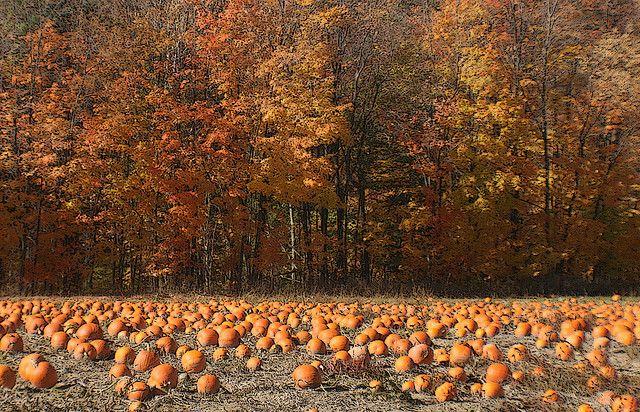 Pumpkin Field / Niagara Escarpment / Guelph Line Near Britannia Road / Halton Hills / Ontario by bill barber,  A very sincere patch