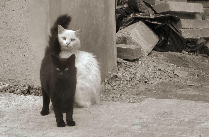 Black and White Art Photography | black cat white cat by ~bludlivijkot on deviantART