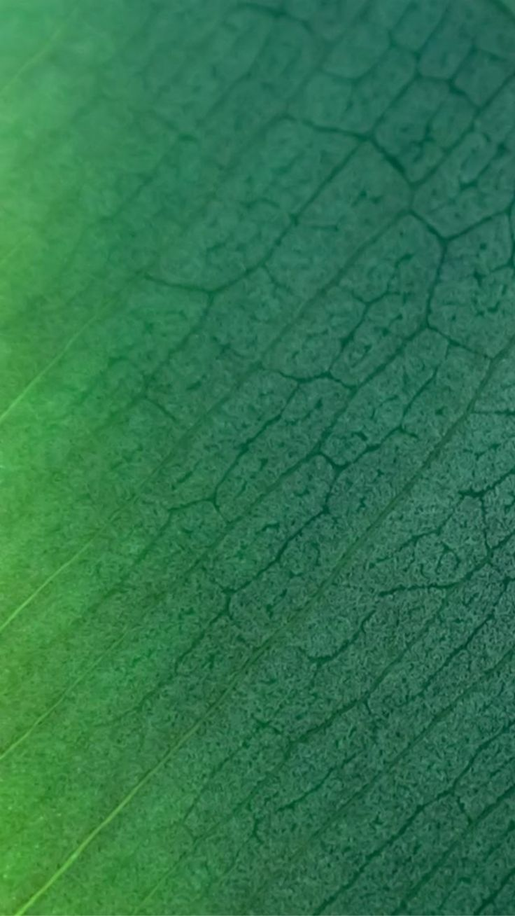 Natural Green Leaf Texture Pattern iPhone 6 wallpaper