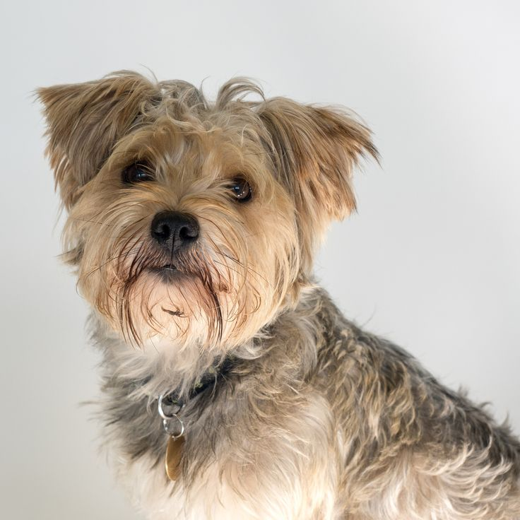 Fergie - Rescued Dog at Wood Green