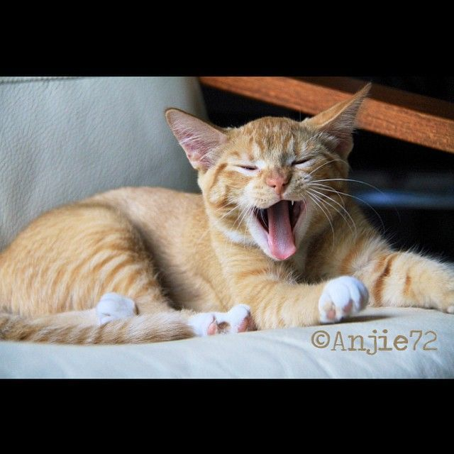 Funny Cat Pictures No Swear Words Cat Best Of The Funny Meme Funny Cat Pictures Cats Cats And Kittens