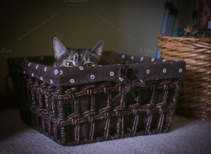 Kitty in a Basket by TinaThelen Photography on @creativemarket
