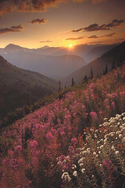 Late summer wildflowers at sunset, Logan Pass, Glacier NP, Montana - by Galen Rowell. https://people.creighton.edu/~cmw85003/photos2.html
