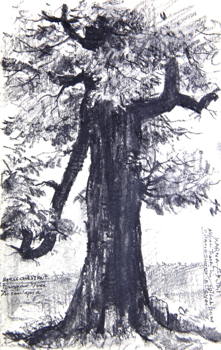 A Horse Chestnut at Akhoti Thach, Himalayas - Water soluble Graphite on Paper