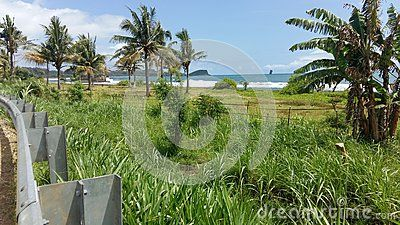 Beautiful thing plant with beach at malang indonesia