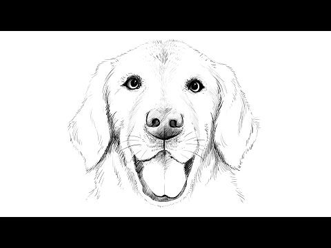 How to draw Labrador Dog - YouTube   Paint On Canvas in 2019