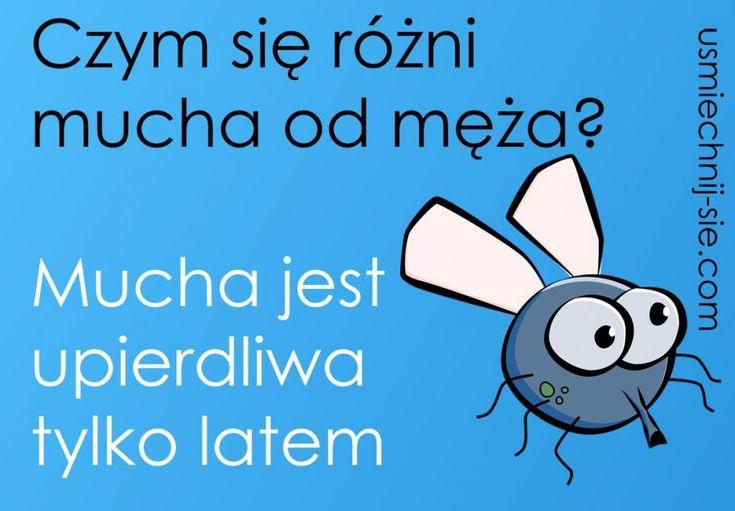 #humor #mucha #smieszne