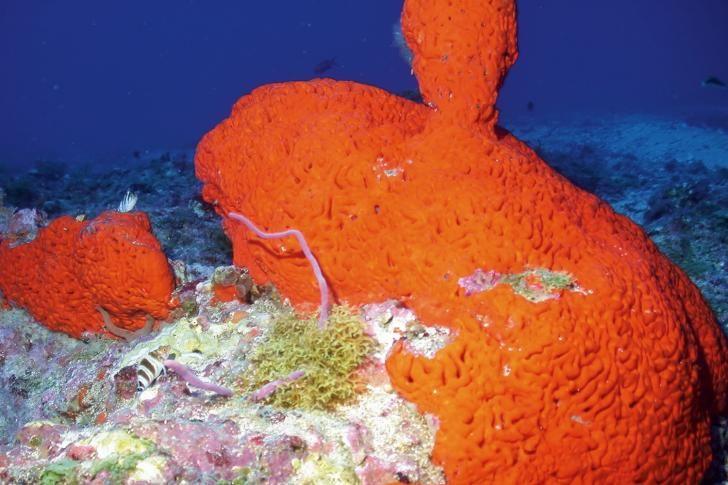 Zeespons vormt inspiratie tot nieuw kankermedicijn | Wetenschap in Beeld