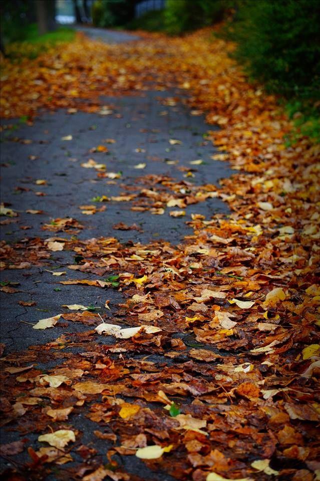 #wagrowiec #wielkopolska #polska #poland #wągrowiec #lake #autumn #jesien #jesień Fot. Angelika Olszewska