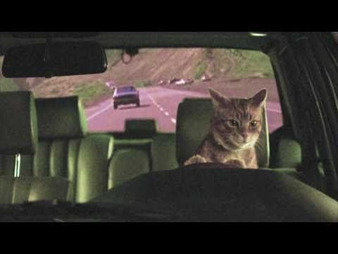"""""""Red Lights"""" is the song...I stumbled across this one and laughed all morning long. I love cat videos."""