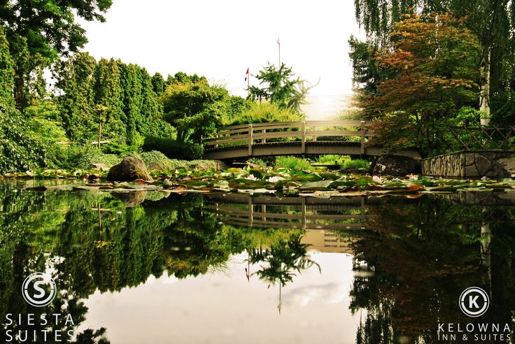 We've found a cool quiet retreat in the middle of the city.  Kasugai Gardens is tucked in behind Kelowna City Hall.  #cool #garden #explorekelowna #quiet #reflect #kelowna