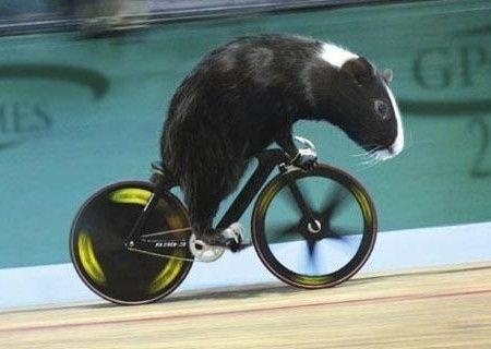 I know what the velodrome can do to raise extra money!